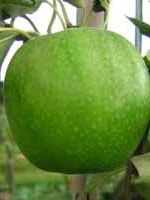 Sadnice jabuka - jabuka Greni Smit
