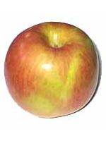 Sadnice jabuka - jabuka Fudži