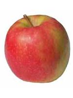 Sadnice jabuka - jabuka Pink Lejdi